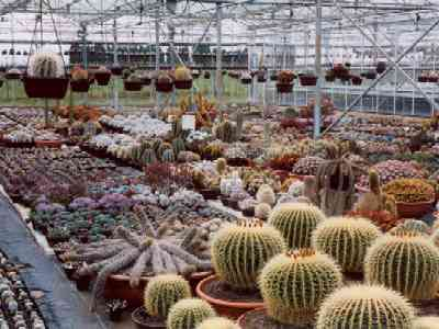 Just some of the wide variety of plants at Southfield Nurseries