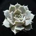 Thumbnail image of Echeveria, deresina